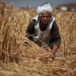 Egypt must depend on imported foods result of dams in Nile basin states